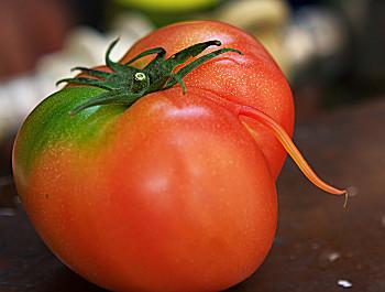 トマトのしっぽ