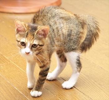 猫好き必見!仕草から分かる猫の気持ち