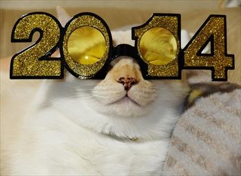 2014年元旦メガネ猫