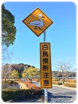 白鳥横断注意看板(水戸市千波湖)